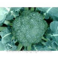 Семена брокколи Квинта F1 2500 сем. Takii Seeds