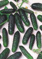 Семена огурца Маша F1 250 сем. Семинис.