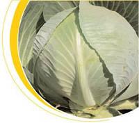 Семена капусты Структон F1 калиброванно. Hazera