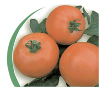 Семена томат VP-1 F1 1000 сем. Никерсон-Цваан