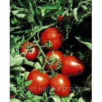 Семена томат Сурия F1 1000 сем. Никерсон-Цваан