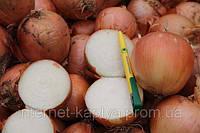 Семена лука Меранто F1 250 000 сем. Никерсон-Цваан