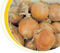 Семена лука Дакапо F1 250 000 сем. никерсон-Цваан