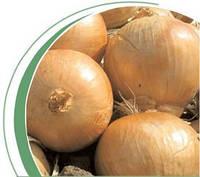 Семена лука Кваттро F1 250 000 сем. Никерсон-Цваан