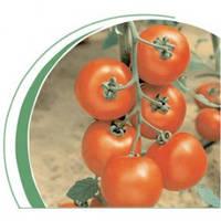 Семена томат Джадело F1 1000 сем. Никерсон-Цваан