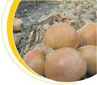 Семена лука Франциско 250 000 сем. Никерсон-Цваан