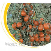 Семена томат Таша F1 1000 сем. Никерсон-Цваан