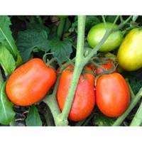 Семена томат Диадема F1 1000 сем. Hazera