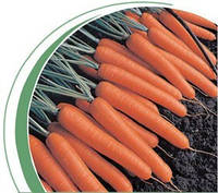 Семена моркови Темпо F1 100 000сем. Никерсон-Цваан