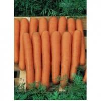 Семена моркови Маестро F1 калиброванное 100 000сем. Никерсон-Цваан