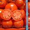 Семена томат Джокер F1 1000 сем. Никерсон-Цваан