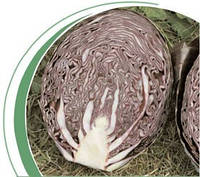 Семена капусты краснокачанной Родон калиброванное F1 2500сем. Никерсон-Цваан
