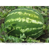 Семена арбуза Кримсон Свит 500 гр. Никерсон-Цваан