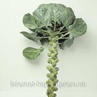 Семена капусты брюссельской Бриллиант F1 2500 сем. Никерсон-Цваан