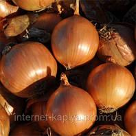 Семена лука Витало F1 250 000 сем. Никерсон-Цваан
