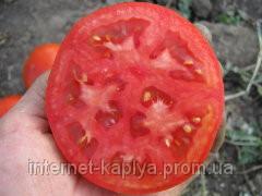 Томат Супернова F1 5000 сем. Клоз.  продажа, цена в Украине. Овощные ... 24b39694bb0