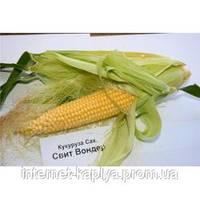 Кукуруза Свит Вондер F1 5000 сем. Agri., фото 1