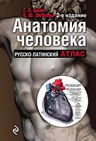 Анатомия человека. Русско-латинский атлас (2-е издание). Билич Г., Зигалова Е.