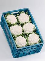 Семена капусты цветной Фарго F1 (Fargo F1).  Упаковка 2500 семян. Производитель Bejo Zaden