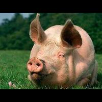 Премикс Аминовитан С 1 для свиней 1 кг