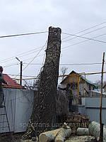 Спил деревьев,удаление аварийных деревьев Киев.