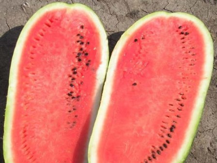 Семена Арбуз Чарлстон Грей  5г (гигант),  ТМ Урожай
