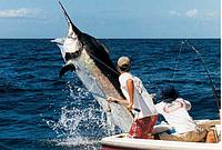 Крупная рыба выбросила рыбака в открытый океан