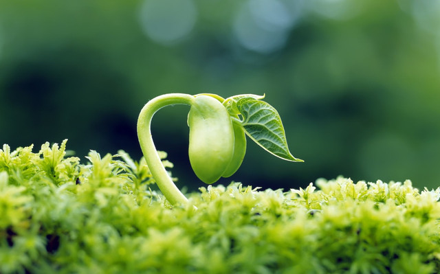 Описание: Nature___Plants_Young_bean_sprout_106520_.jpg
