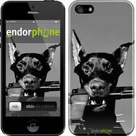 """Чехол на iPhone 5s Доберман """"2745c-21"""""""
