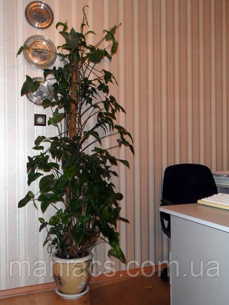 Опора-кокос для растений, 80 см