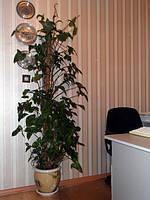 Опора-кокос для растений, 80 см, фото 1