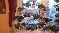 Глоксиния-1, подставка для цветов на 15 чаш, фото 1