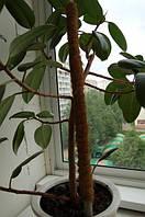 Опора-кокос для растений, 120 см, фото 1