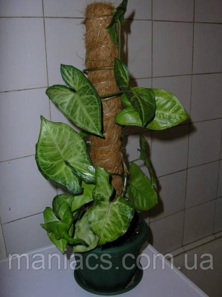 Опора-кокос для растений, d=25 мм, 60 см