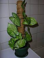 Опора-кокос для растений, d=25 мм, 60 см, фото 1