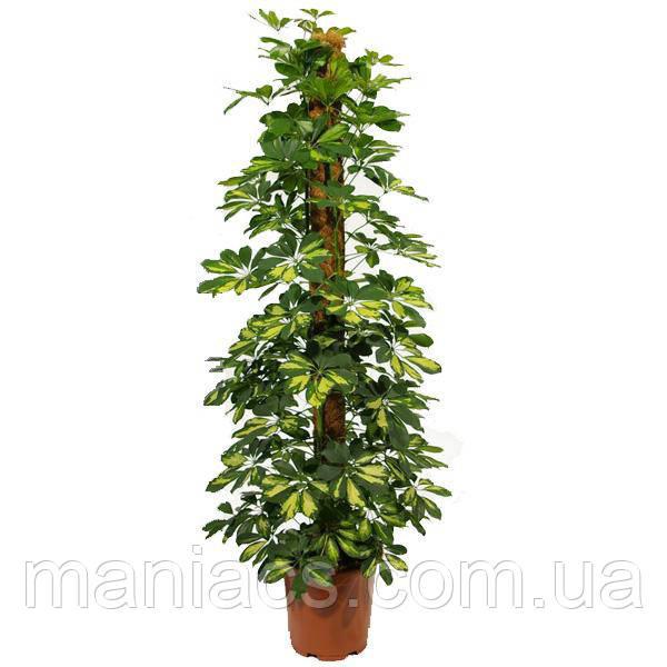 Опора-кокос для растений, d=25 мм, 40 см