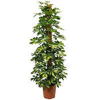 Опора-кокос для растений, d=25 мм, 40 см, фото 1