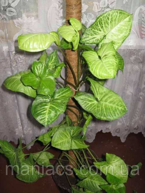 Опора-кокос для растений, d=25 мм, 120 см