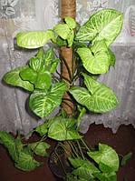 Опора-кокос для растений, d=25 мм, 120 см, фото 1