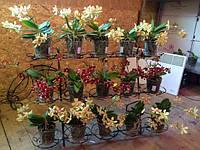 Фиалка-6, подставка для цветов на 15 чаш
