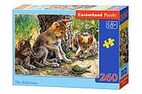 Пазлы Castorland  260шт (27385) 32*23 см (Волчата)
