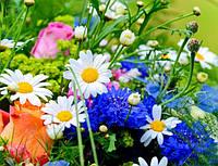 Семена цветов, саженцев, клубневых растений многолетних и однолетних