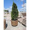 Вазон садовый для цветов «Орион» бетонный - Фото