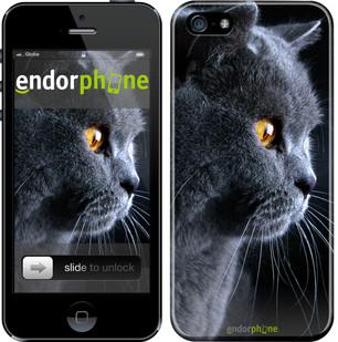 """Чехол на iPhone SE Красивый кот """"3038c-214"""""""