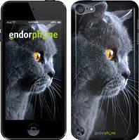 "Чохол на iPod Touch 6 Красивий кіт ""3038c-387"""