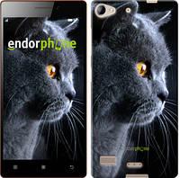"""Чехол на Lenovo Vibe X2 Красивый кот """"3038u-238"""""""