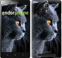 """Чехол на Lenovo Vibe C2 Красивый кот """"3038c-397"""""""