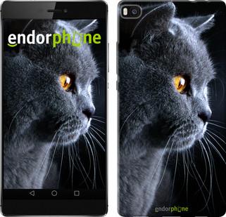 """Чохол на Huawei Ascend P8 Красивий кіт """"3038u-123"""""""