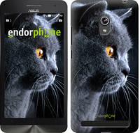 """Чехол на Asus ZenFone 6 A600CG Красивый кот """"3038u-143"""""""