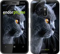 """Чехол на Nokia Asha 308/309 Красивый кот """"3038u-286"""""""